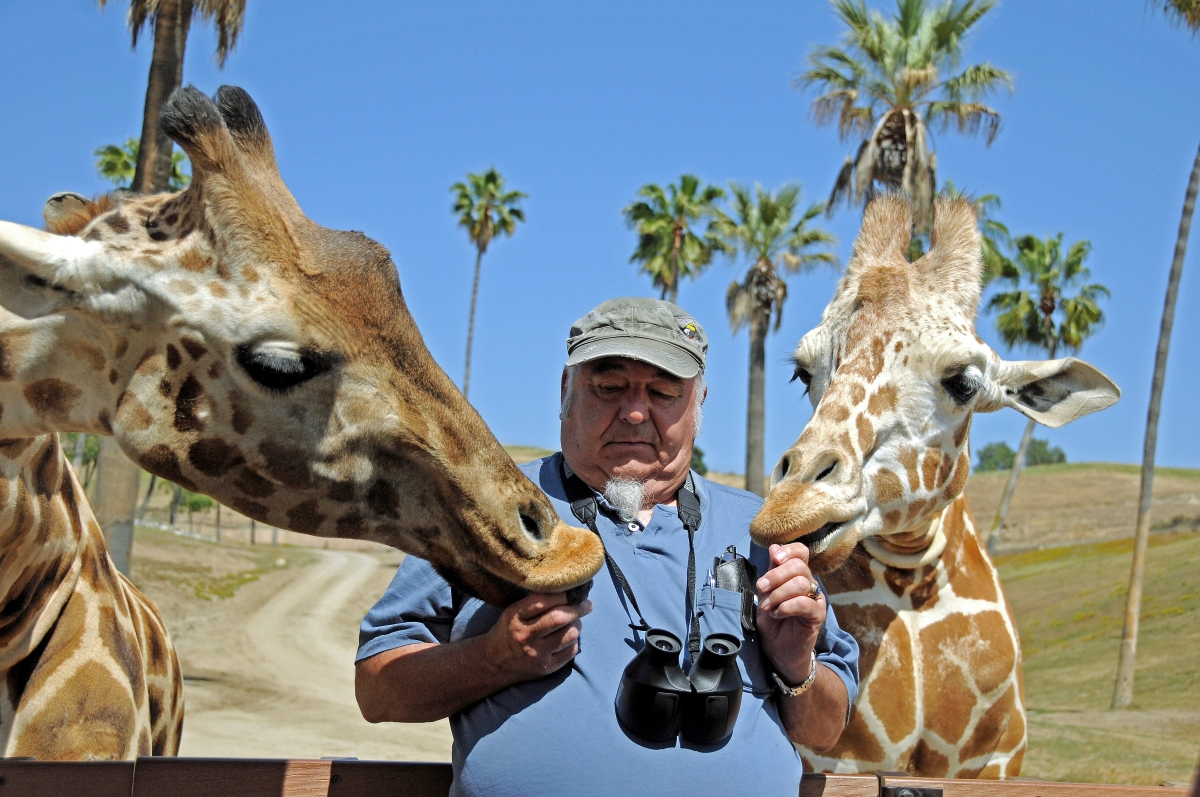 Feeding The Giraffes - San Diego Safari Park