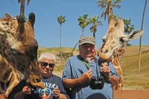 Feeding the giraffes was really fun.