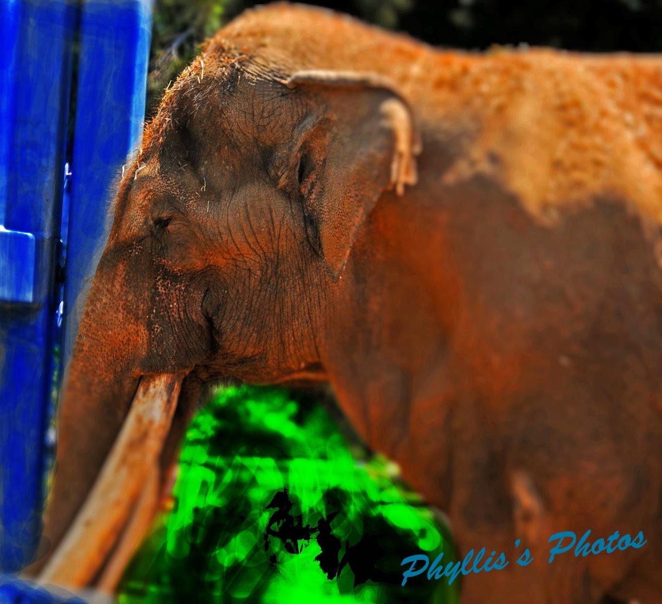 Elephant at San Diego Zoo.