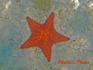 Water Twinkle Star