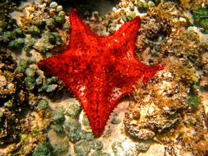 Gorgeous Starfish