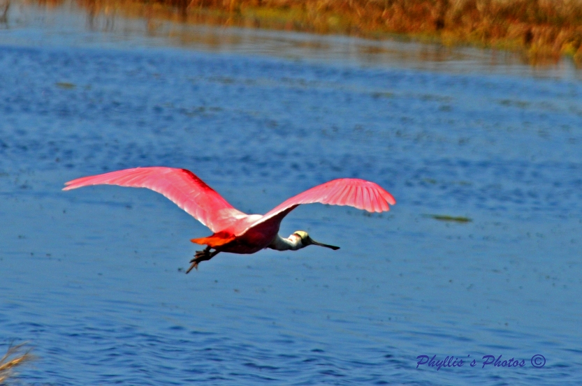 Wings of Vibrant Color In Flight