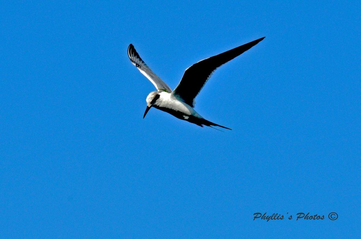 Beautiful Bird Soaring Gracefully