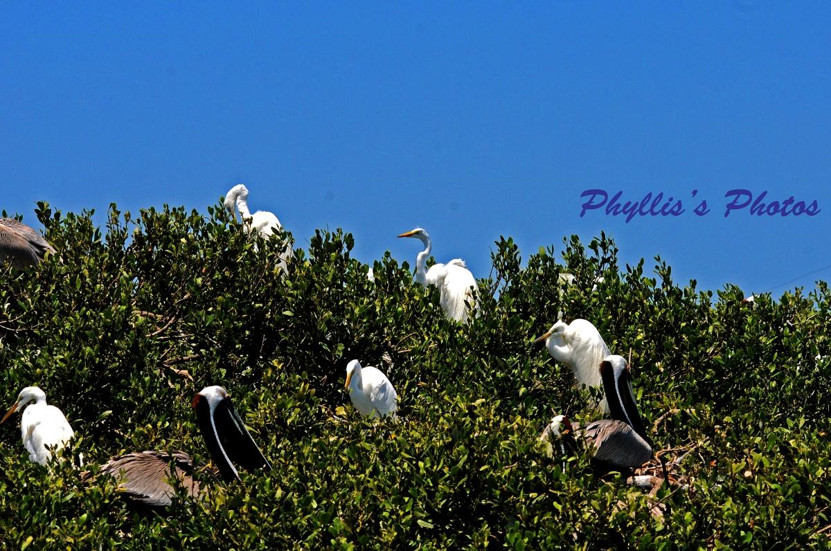 Bird Island