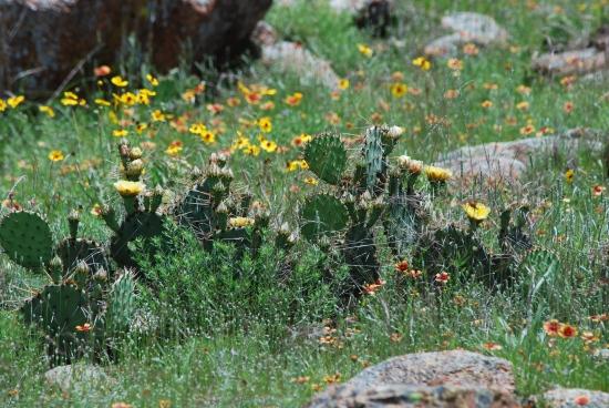 DSC_0421 Cactus Rocks