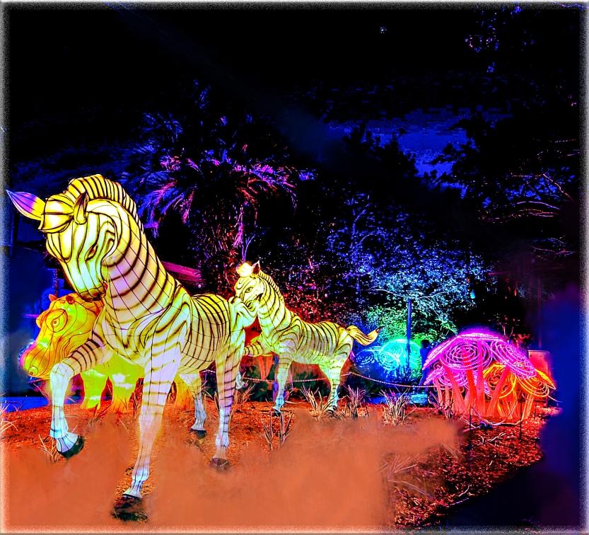 ANIMALS Zoominations asj-adj 31-2